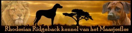 Rhodesian Ridgeback Kennel van het Maasjesfles