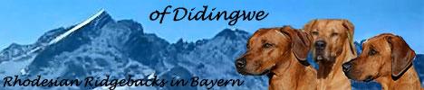 Kennel of Didingwe