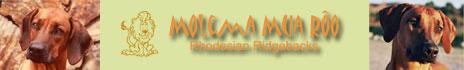 Molema Mua Rôo Rhodesian Ridgebacks