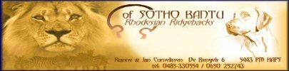 of SOTHO BANTU Rhodesian Ridgebacks